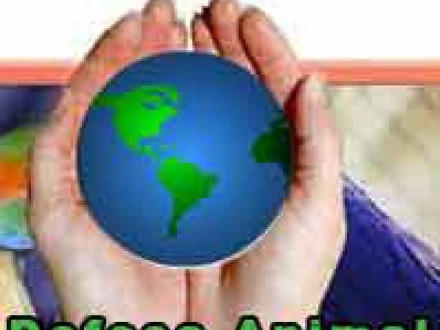 Fundação Animal Livre , um presente para o futuro !