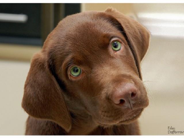 Castração ajuda a prevenir o desenvolvimento de doenças em cães e gatos