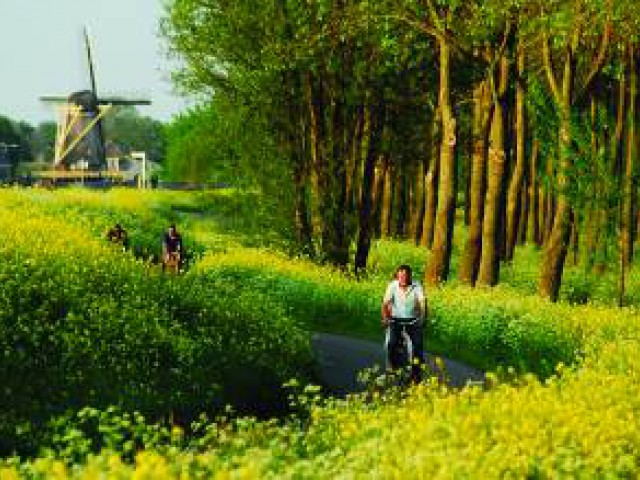 Bicicleta é a melhor opção para se locomover na Holanda