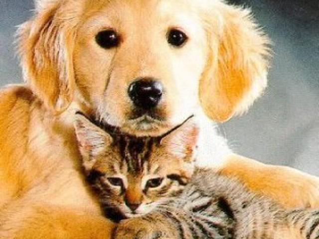 15º Dia Nacional de Adotar um Animal foi comemorado no dia 4 de outubro