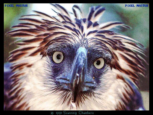 Turismo de observação de aves ganha adeptos no Brasil