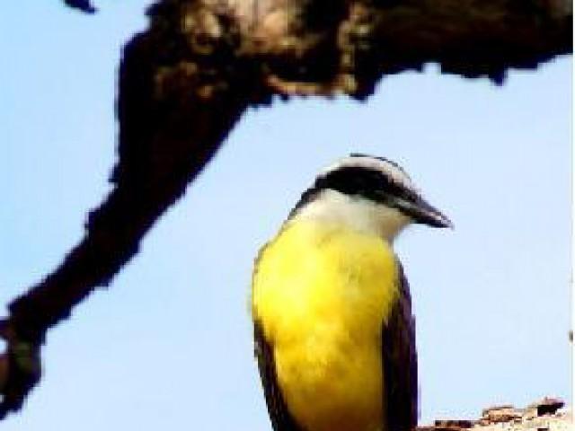 Desafios do turismo e da ornitologia na Amazônia são discutidos em congresso
