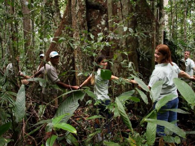 Investir no conceito de árvores em pé ajuda a garantir a manutenção de nossas florestas