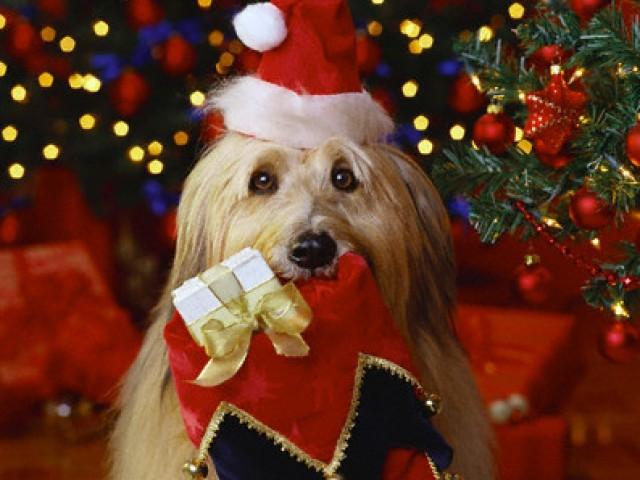 Natal....tempo de demonstrar o amor pelos animais !